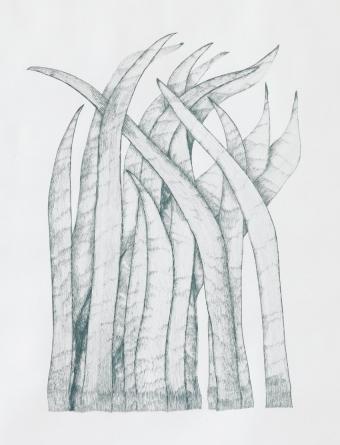Gras_7/06