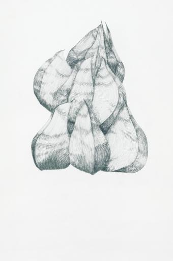 Lupine_1/09
