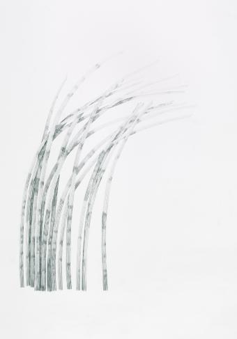Gras_1/09